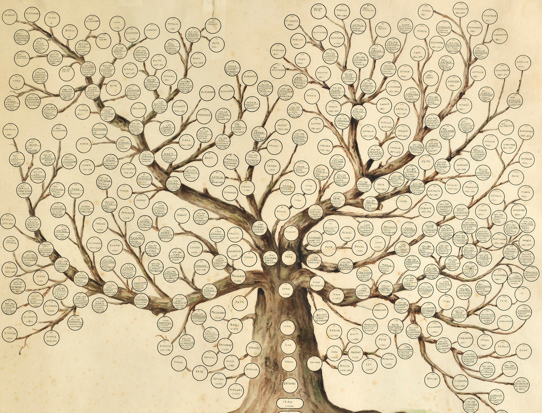 Arbore genealogic model de completat